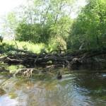 Plaukimas Baidarėmis Širvinta